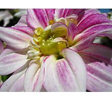 Flowers for the Breast Cancer  Photographic Print