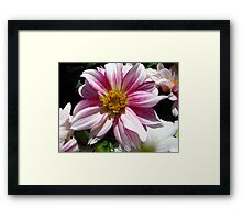 Flowers for Breast Cancer  Framed Print