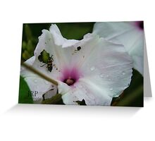 Flower and Bug Greeting Card