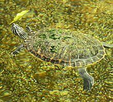 Swimming Turtle! by Jacqueline van Zetten