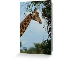 Giraffe Side Profile Greeting Card