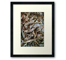 Fish, anyone? Framed Print