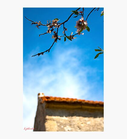 Spring on the roof Photographic Print