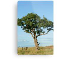 Tree in Uganda Metal Print