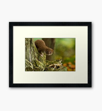 Who goes there....? Framed Print