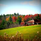 Hillside Beauty~ by virginian