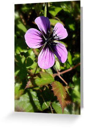 Summer Flower by bertie01