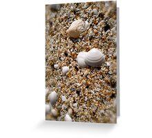 Seashells on a sea shore Greeting Card