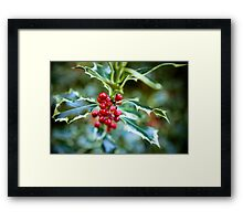 Holly at Christmas time Framed Print