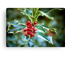 Holly at Christmas time Canvas Print