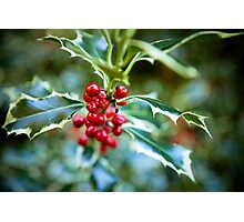 Holly at Christmas time Photographic Print