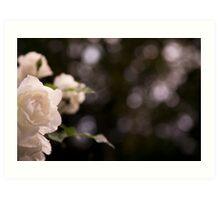 Wild white rose Art Print