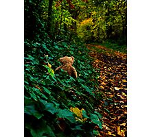 Bear looking for wintering spot Photographic Print