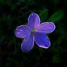 Fractal Light Purple Elegy by Atılım GÜLŞEN