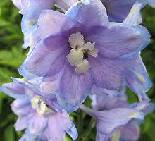 Delphiniums by Lunaria