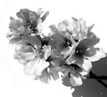 BLACK AND WHITE ALMOND TREE by joancaronil