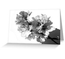 BLACK AND WHITE ALMOND TREE Greeting Card