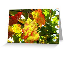 Painted leaves, New York City  Greeting Card
