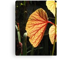 Leaves...the plant´s lungs Canvas Print
