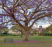 New Farm Park • Brisbane • Queensland by William Bullimore