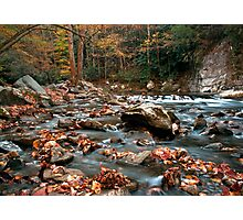 Collecting Fall Photographic Print