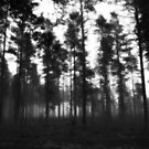 Haunted Forest by SunDwn