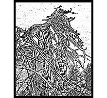 the weight and wait of winter Photographic Print