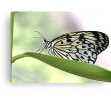 Rockin' Rice Paper Butterfly Canvas Print