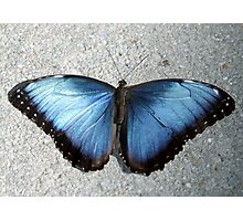 Bluetiful Blue Morpho Butterfly Photographic Print