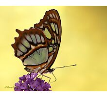 Magical Malachite Butterfly Photographic Print