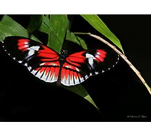 Piano Key Butterfly Photographic Print