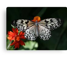 Regal Rice Paper Butterfly Canvas Print
