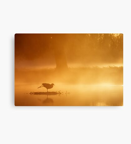 Early Morning Yoga Canvas Print