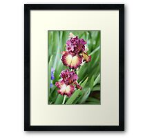 Iris 6 2011 Framed Print