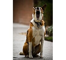Being a Dog is Just So...... Photographic Print