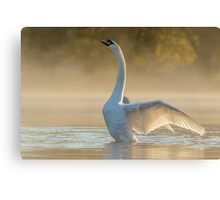 Morning Stretch Canvas Print