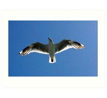 Seagull From Below Art Print