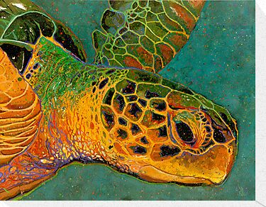 Turtle #2 by Richard Bradish Jr