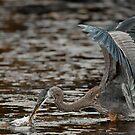 Blue Heron by Bill Maynard