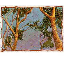 Sunlight on Trees Photographic Print