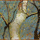 Birch by Richard Bradish Jr