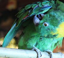 Colorful Parrot 2 by Dreebs