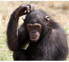 Chimp Eden V Photographic Print