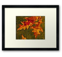 Oak Leaves Framed Print