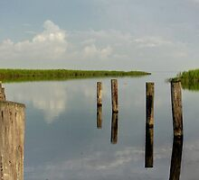Louisiana Bayou 3 by Dreebs