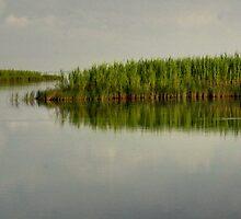 Louisiana Bayou 4 by Dreebs