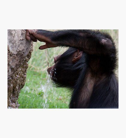 Chimp Eden VI Photographic Print