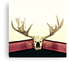 moose trophy Canvas Print