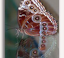 Le Papillon et Narcisme  by John44