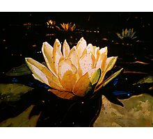 Glowing Lotus Photographic Print